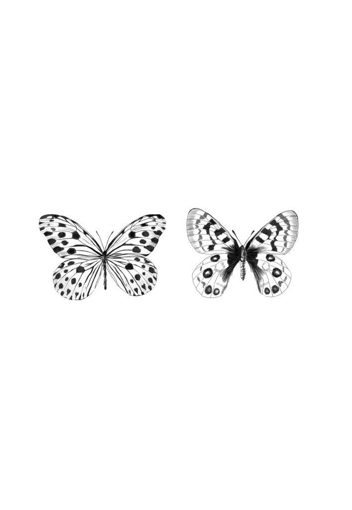 Butterflies illustration by ana moyano