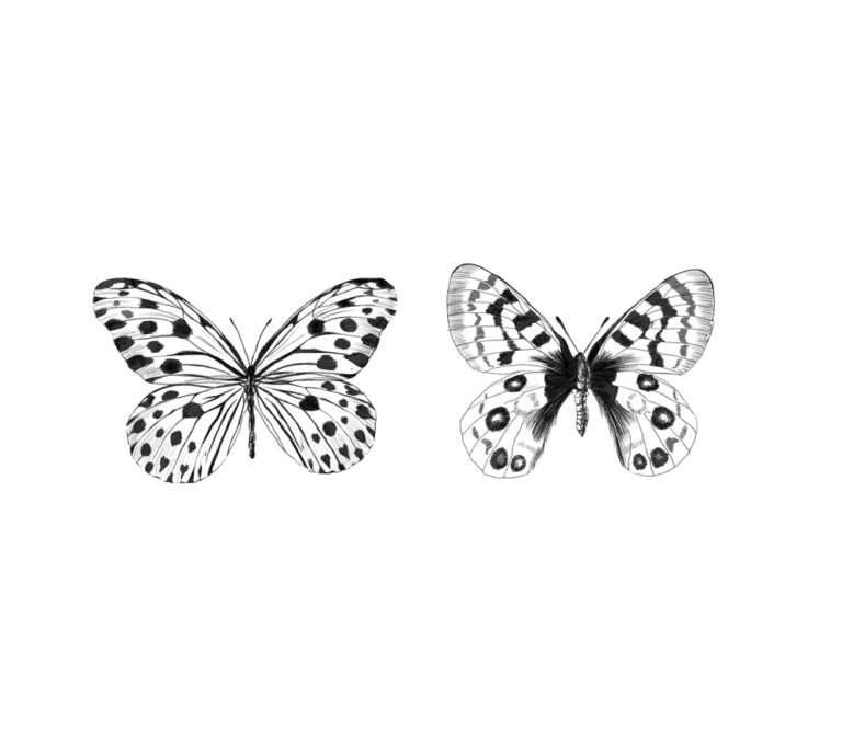 Butterflies illustration by ana moyano